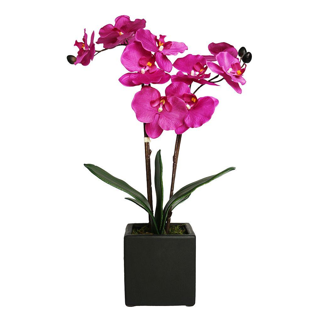 Lloyd & Hannah 2-Stem Artificial Orchid Flower Arrangement