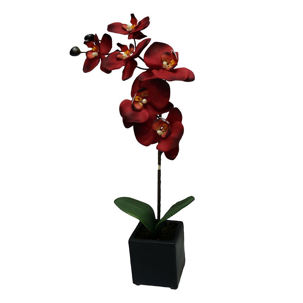 Lloyd & Hannah 1-Stem Artificial Orchid Flower Arrangement