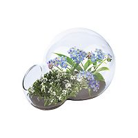DuneCraft Double Bubble Glass Terrarium Desert Biodome