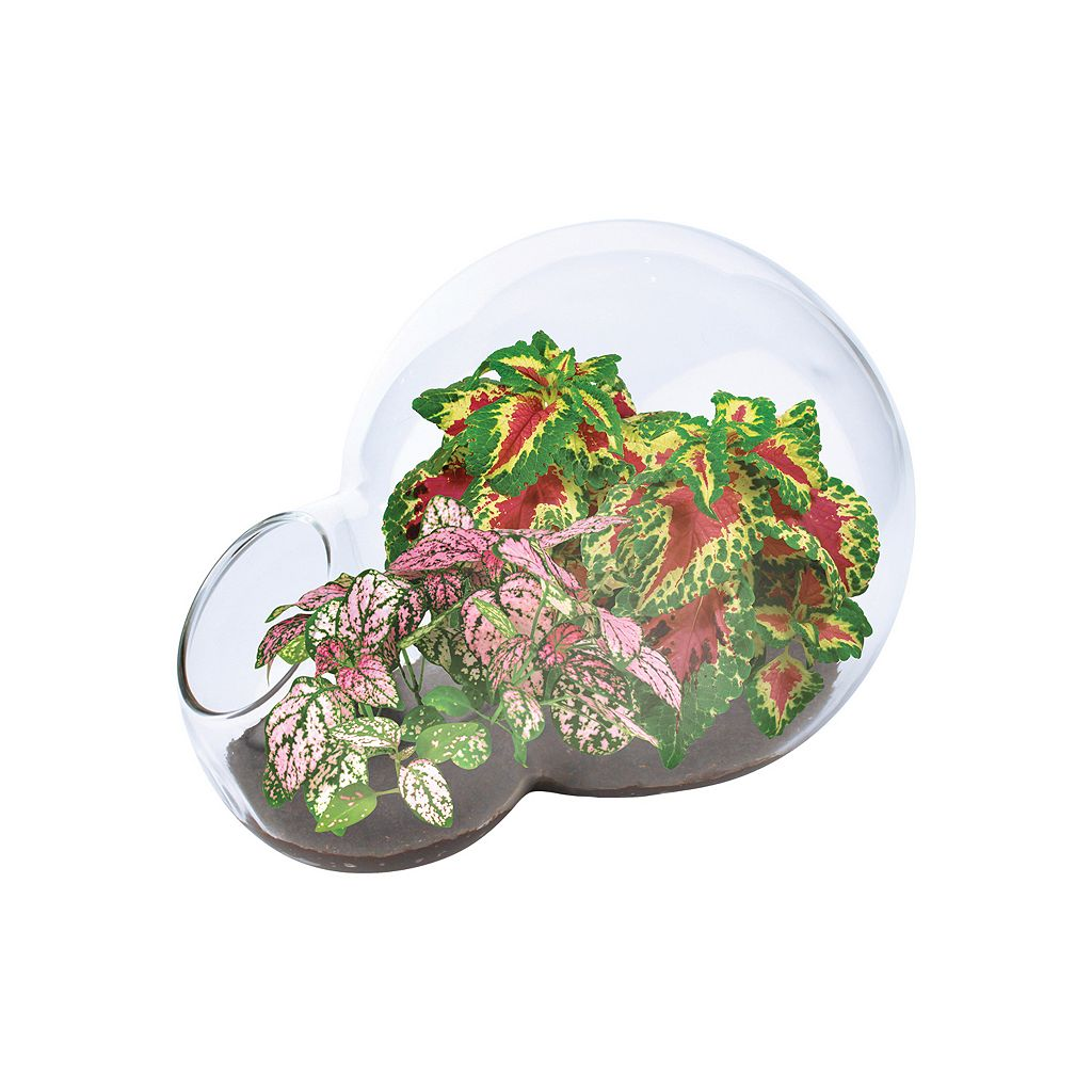 DuneCraft Double Bubble Glass Terrarium Color Explosion