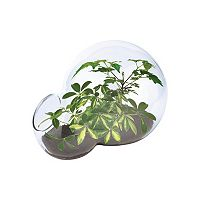 DuneCraft Double Bubble Glass Terrarium Tropical Trees