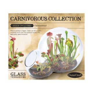 DuneCraft Double Bubble Glass Terrarium Carnivorous Collection