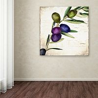 Trademark Fine Art Olive Branch III Canvas Wall Art