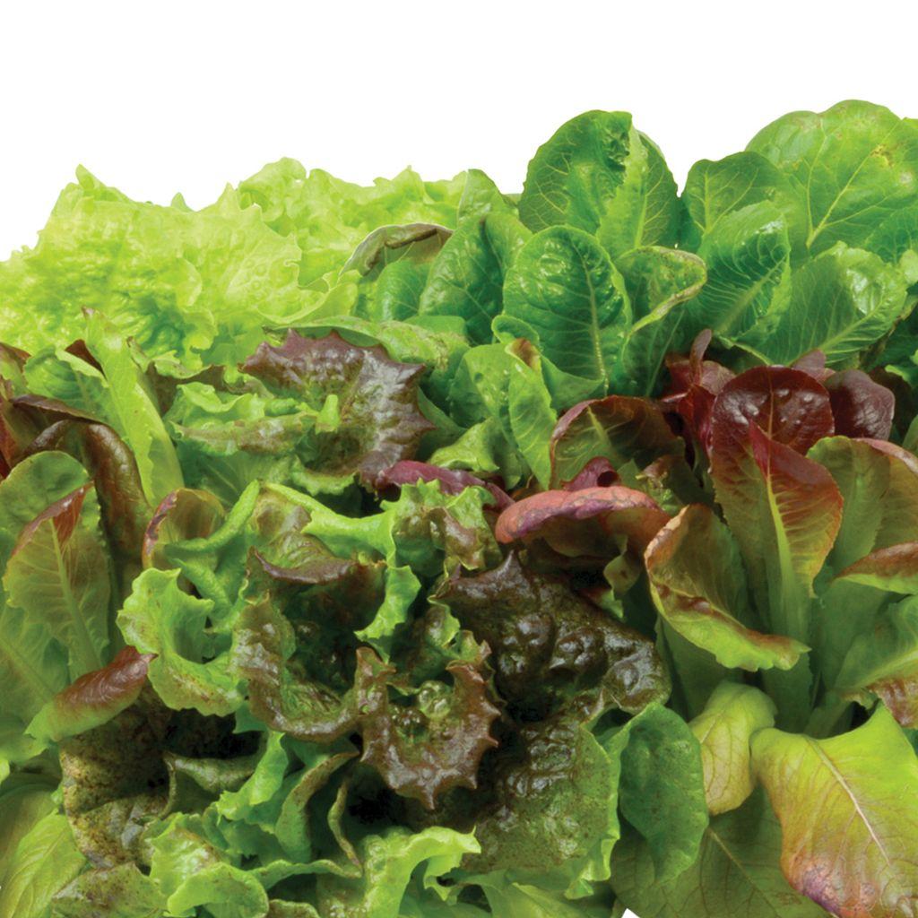 Miracle-Gro AeroGarden Heirloom Salad Greens 3-Pod Seed Kit