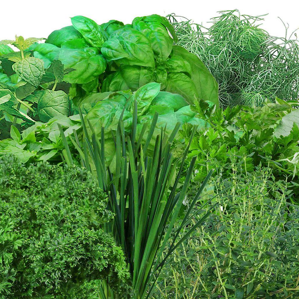 Miracle-Gro AeroGarden Gourmet Herb 9-Pod Seed Kit