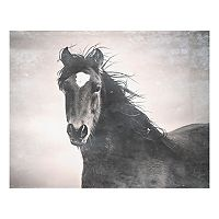 Outlaw Horse Canvas Wall Art