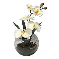 SONOMA Goods for Life™ Artificial Orchid Arrangement Table Decor