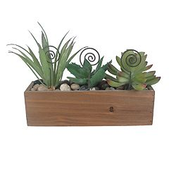 SONOMA Goods for Life™ Artificial Succulent Photo Clip