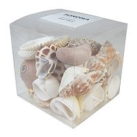 SONOMA Goods for Life™ Coastal Shell Vase Filler 37 pc Set