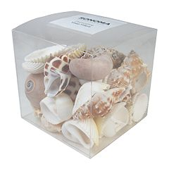 SONOMA Goods for Life™ Coastal Shell Vase Filler 37-piece Set