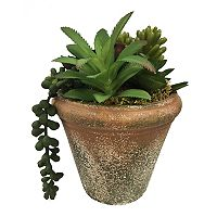 SONOMA Goods for Life™ Artificial Succulent Potted Plant