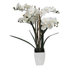 SONOMA Goods for Life™ Potted Artificial Orchid Flower Arrangement