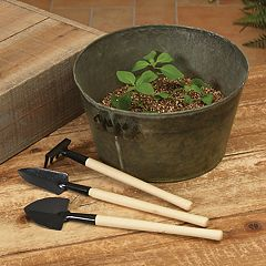 Gerson Metal Bucket & Basil Herb Garden 5 pc Set