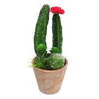 SONOMA Goods for Life™ Artificial Cactus Planter