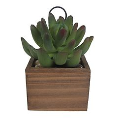 SONOMA Goods for Life™ Artificial Succulent Wood Photo Clip