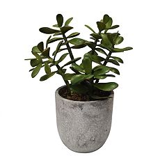 SONOMA Goods for Life™ Artificial Potted Plant Table Decor