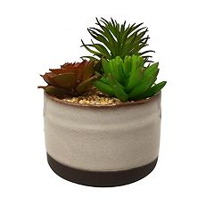 SONOMA Goods for Life™ Artificial Succulent Table Decor