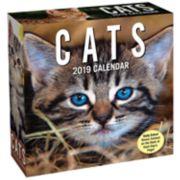 Cats 2019 Daily Desk Calendar
