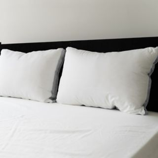 Sealy Elite 2-pack Extra Firm Pillow