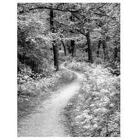 """New View Winding Path 16"""" x 20"""" Canvas Wall Art"""