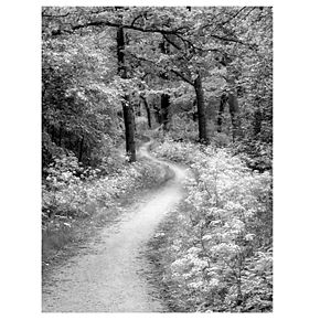 """New View Winding Path 22"""" x 28"""" Canvas Wall Art"""