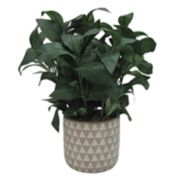 SONOMA Goods for Life? Artificial House Plant Table Decor