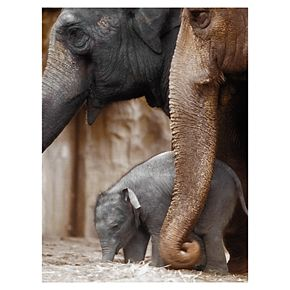 "Family Moment Elephant 24"" x 18"" Canvas Wall Art"