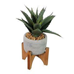 SONOMA Goods for Life™ Artificial Aloe Decor