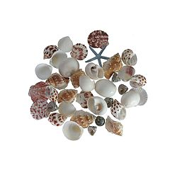 SONOMA Goods for Life™ Coastal Shell Vase Filler 37-piece Set