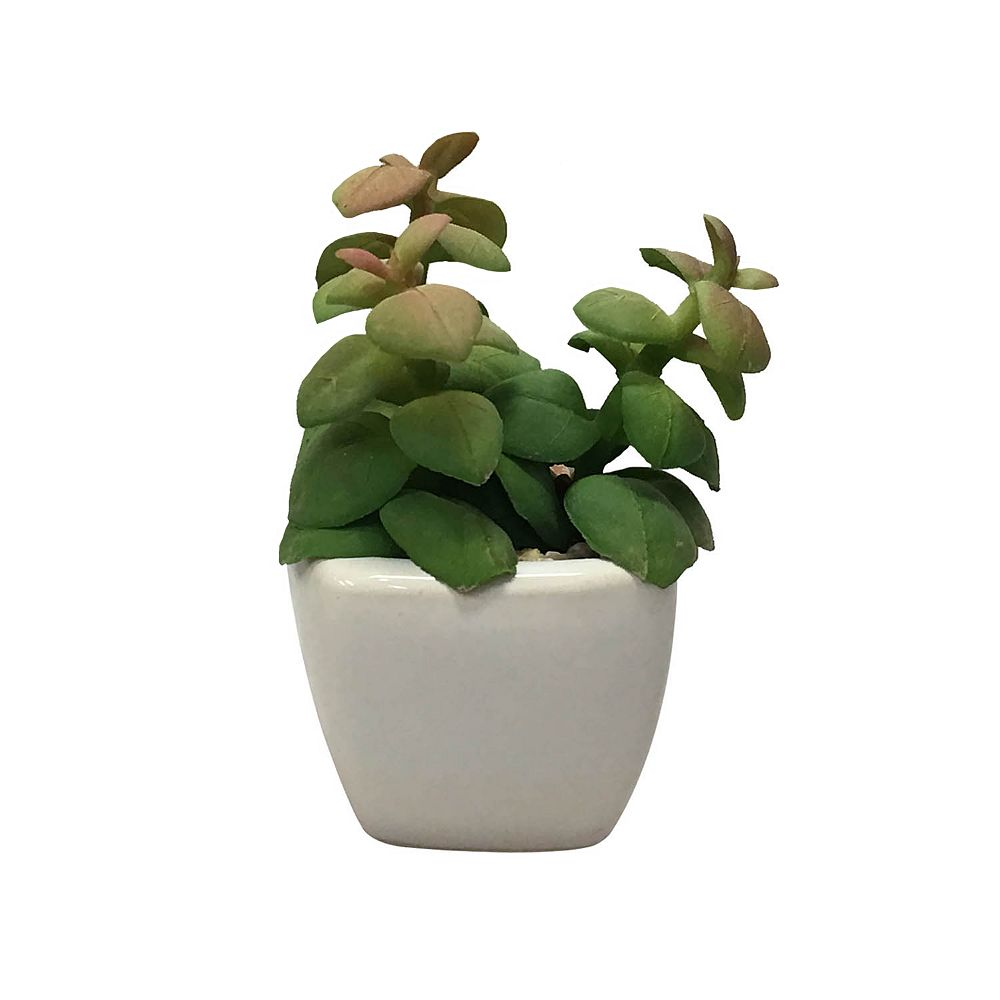 SONOMA Goods for Life® Artificial Succulent Plant