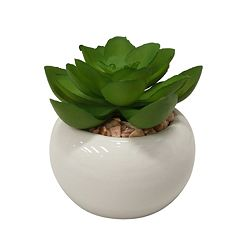 SONOMA Goods for Life™ Small Artificial Succulent Plant