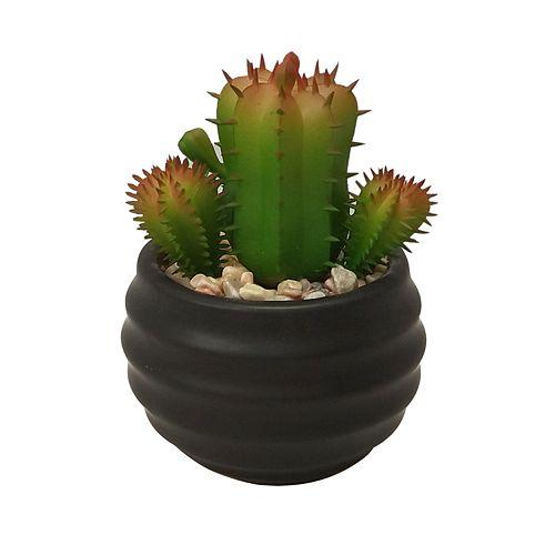 SONOMA Goods for Life® Medium Artificial Cactus Plant