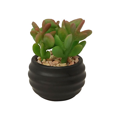 SONOMA Goods for Life? Artificial Succulent Plant