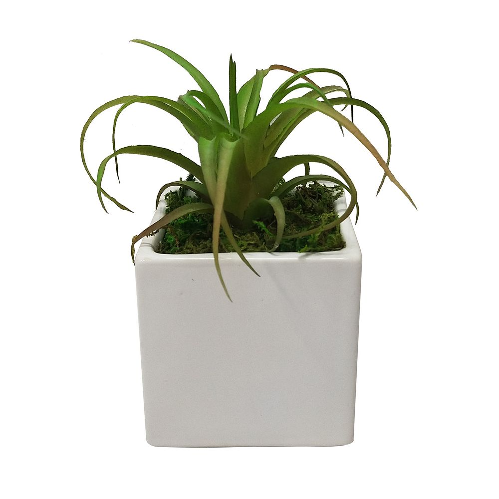 SONOMA Goods for Life® White Pot Artificial Succulent Plant