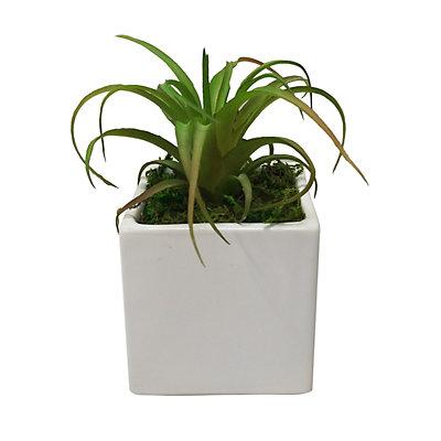 SONOMA Goods for Life? White Pot Artificial Succulent Plant