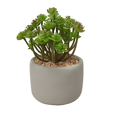 SONOMA Goods for Life? Cement Pot Artificial Succulent Plant