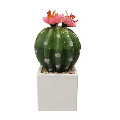 SONOMA Goods for Life? Ceramic Pot Artificial Cactus Plant
