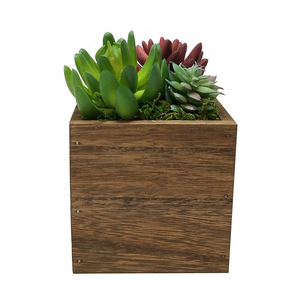 SONOMA Goods for Life® Artificial Succulents Plant