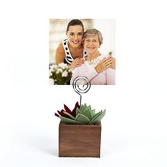 New View Gifts Succulent Box Photo Clip