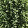 "National Tree Company 30"" Artificial Cypress Tree"