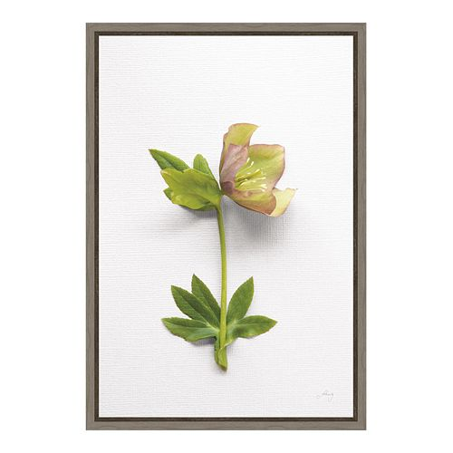 Amanti Art Hellebore Study III Canvas Framed Wall Art