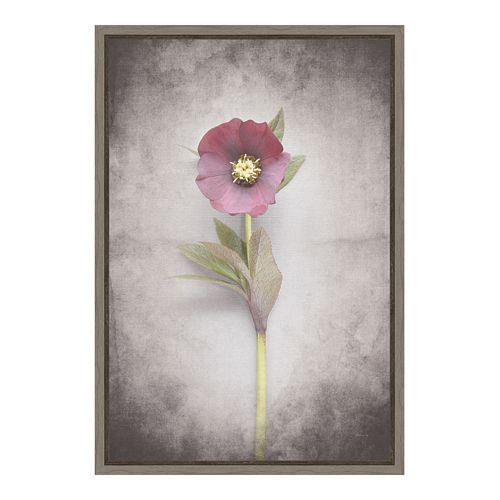 Amanti Art V-Hellebore Study VI Canvas Framed Wall Art