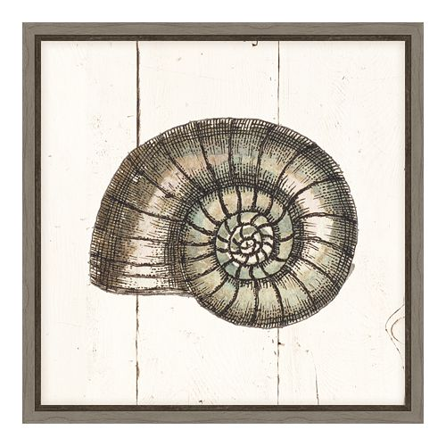 Amanti Art Shell Sketches I Canvas Framed Wall Art