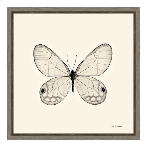 Amanti Art Butterfly I Canvas Framed Wall Art