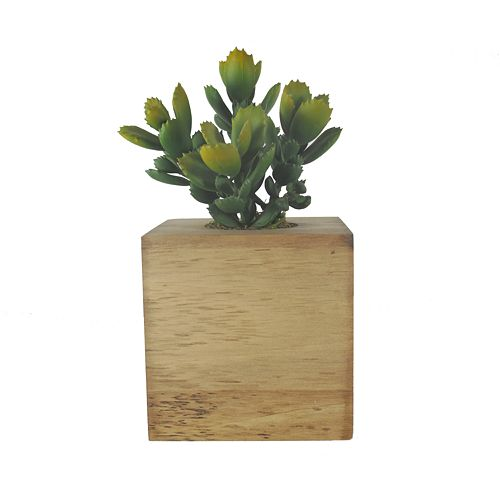 SONOMA Large Faux Succulent with Magnet
