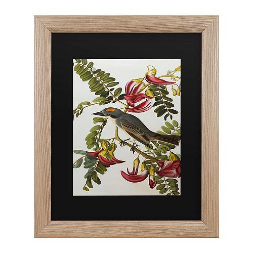 Trademark Fine Art Gray Tyrant Gray Kingbird Framed Art