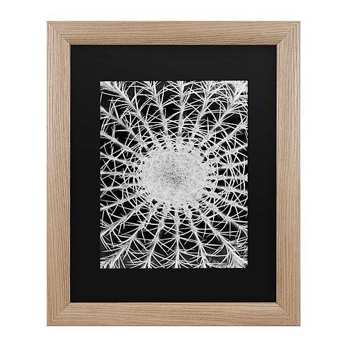 Trademark Fine Art Kurt Shaffer Barrel Cactus Framed Wall Art