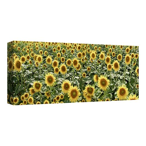 Tuscan Sunflower Pano #1 by Alan Blaustein Canvas Wall Art