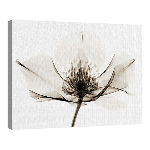 Fine Art Canvas Fine Art Canvas Hellebore I by Robert Coop Wall Art