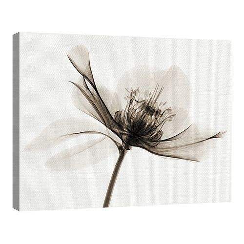 Fine Art Canvas Hellebore II by Robert Coop